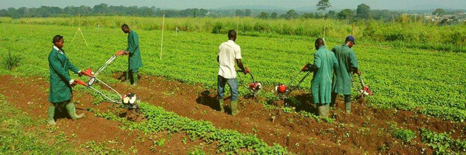 ...training new generation of farmers
