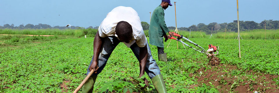 ...promoting good agricultural practices